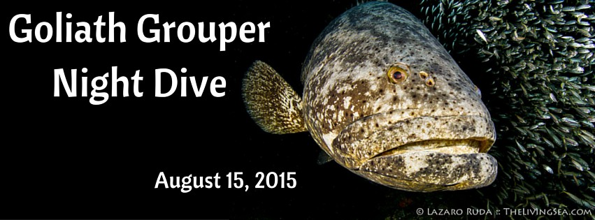 Goliath Grouper Night Dive