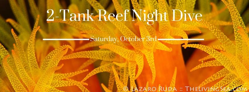 2-Tank Reef Night Dive