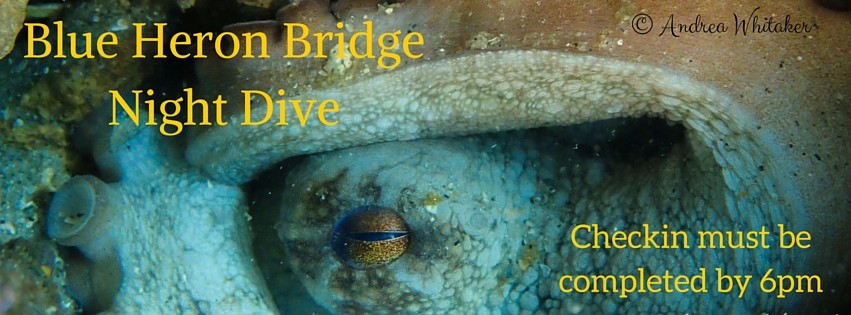 Blue Heron Bridge Night Dive: April 20th