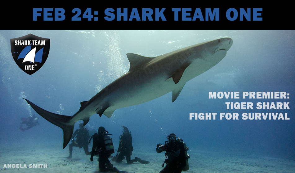 FEB 24: SOCIAL NIGHT – SHARK TEAM ONE
