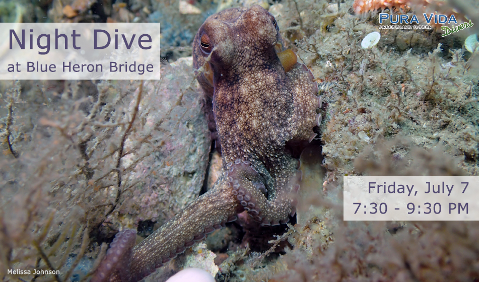 JULY 7 GUIDED NIGHT DIVE AT BLUE HERON BRIDGE