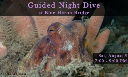 AUGUST 5 GUIDED NIGHT DIVE AT BLUE HERON BRIDGE