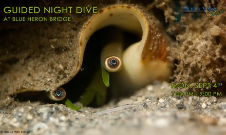SEPT 4: GUIDED NIGHT DIVE AT BLUE HERON BRIDGE