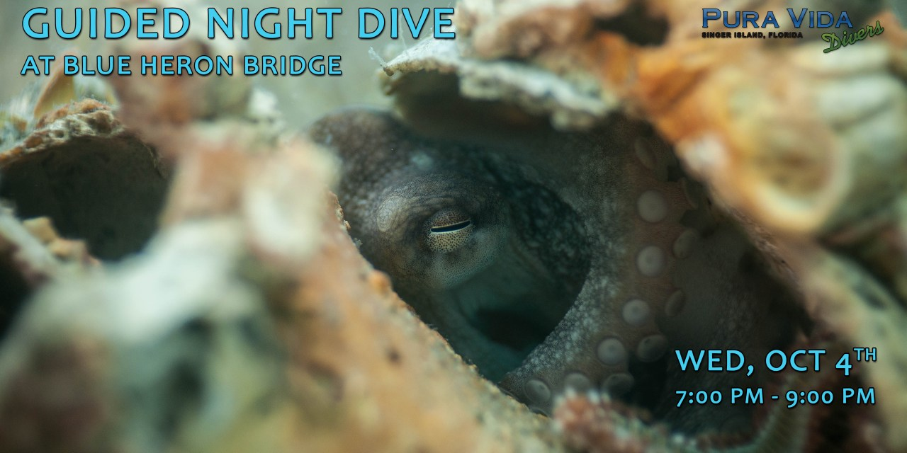 OCT 4: GUIDED NIGHT DIVE AT BLUE HERON BRIDGE