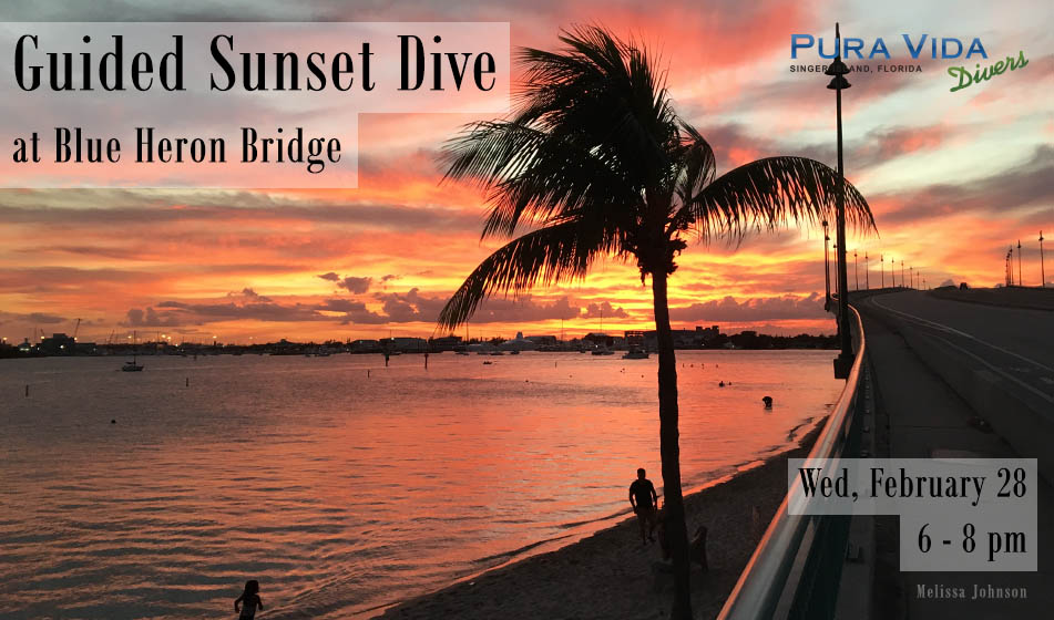 FEB 28: GUIDED SUNSET DIVE AT BLUE HERON BRIDGE