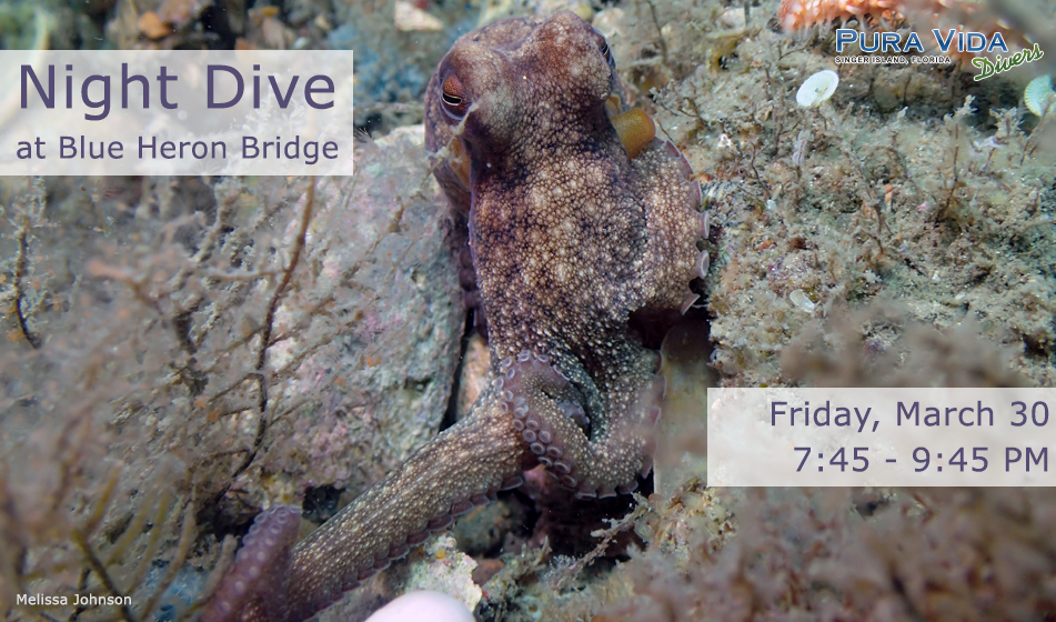 MARCH 30: GUIDED NIGHT DIVE AT BLUE HERON BRIDGE