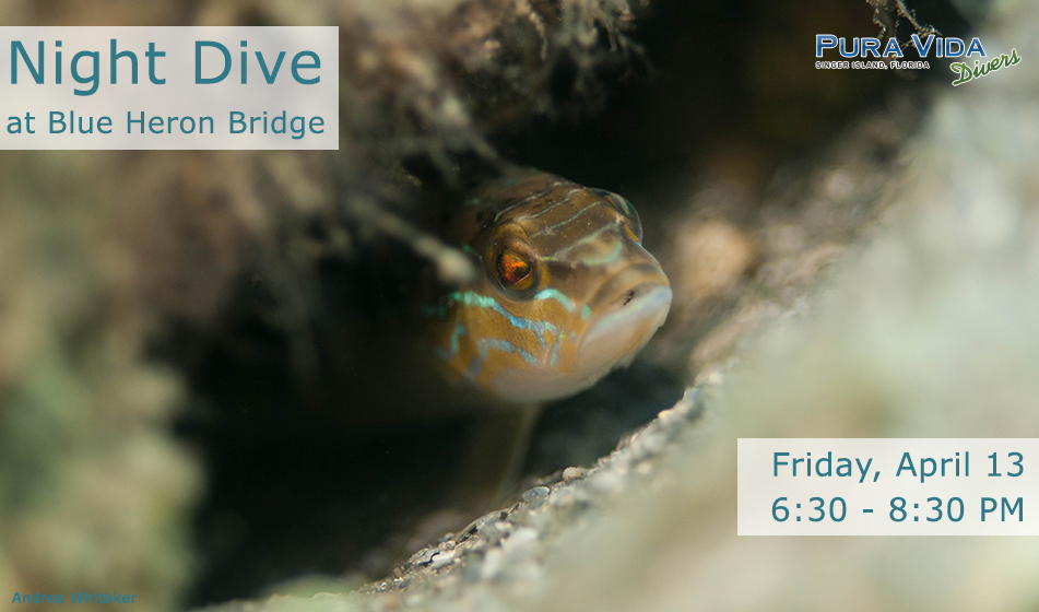 APRIL 13: GUIDED NIGHT DIVE AT BLUE HERON BRIDGE