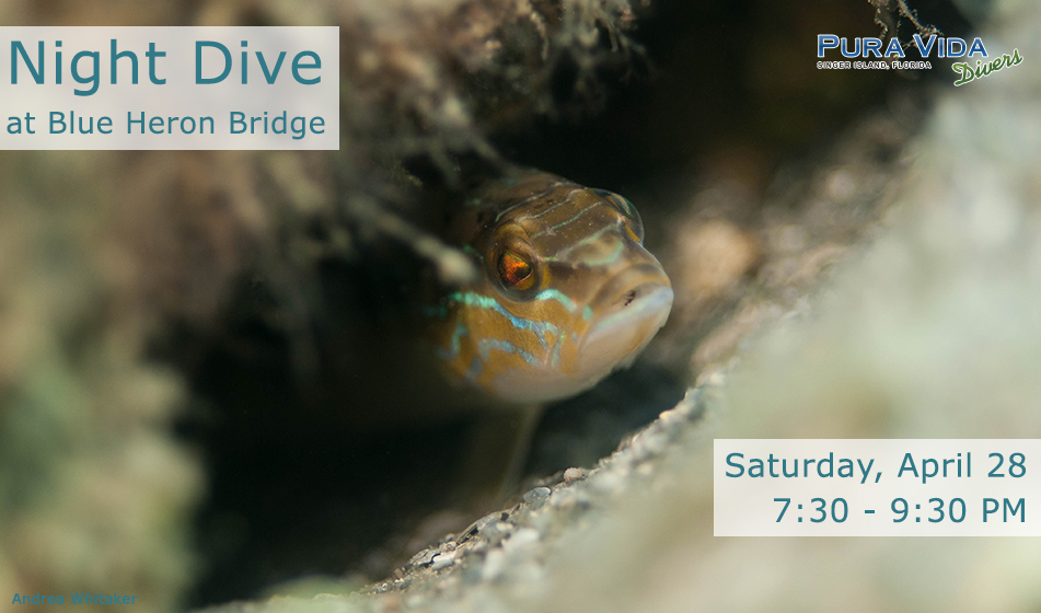 APRIL 28: GUIDED NIGHT DIVE AT BLUE HERON BRIDGE