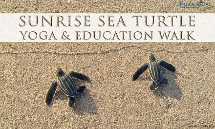 AUG 22: SUNRISE SEA TURTLE YOGA & EDUCATION WALK