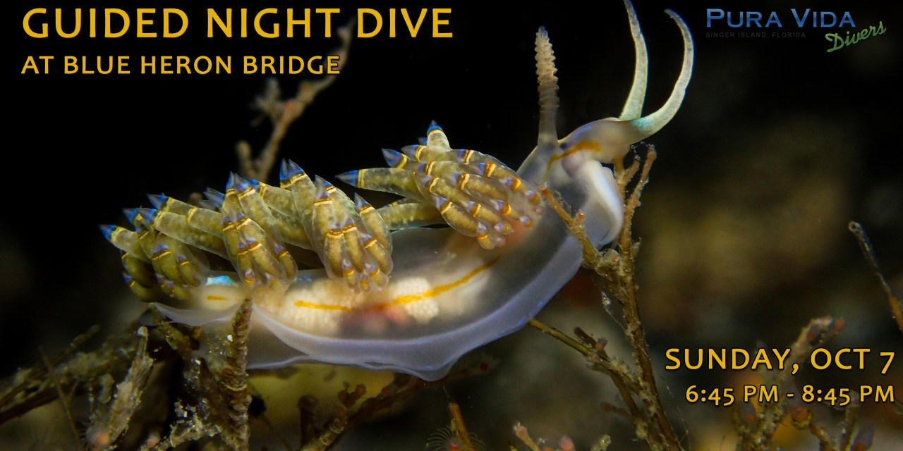 OCT 7: GUIDED NIGHT DIVE AT BLUE HERON BRIDGE