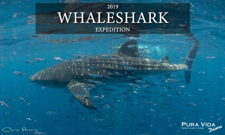 2019 WHALESHARK EXPEDITION