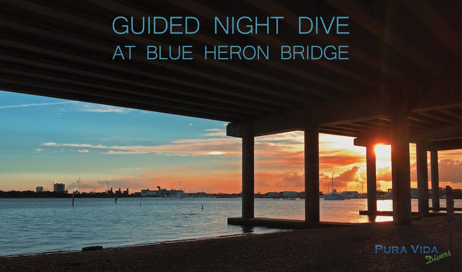 JULY GUIDED NIGHT DIVES