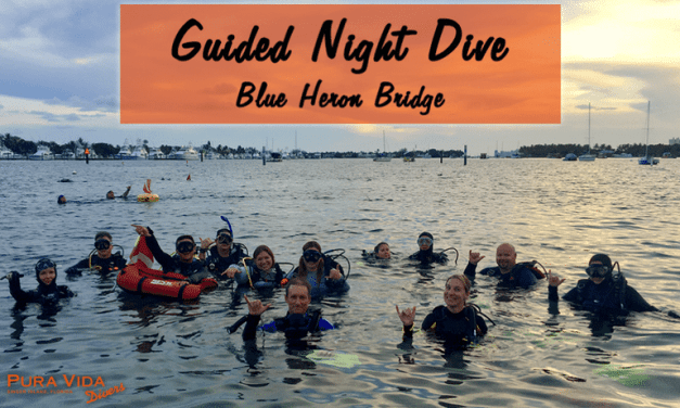 OCTOBER GUIDED NIGHT DIVES