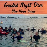 DECEMBER GUIDED NIGHT DIVES