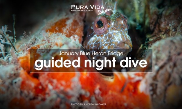 JANUARY GUIDED NIGHT DIVES