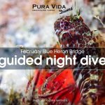 FEBRUARY GUIDED NIGHT DIVES