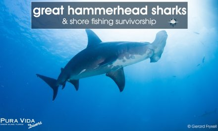 GREAT HAMMERHEAD SHARKS & SHORE FISHING SURVIVORSHIP
