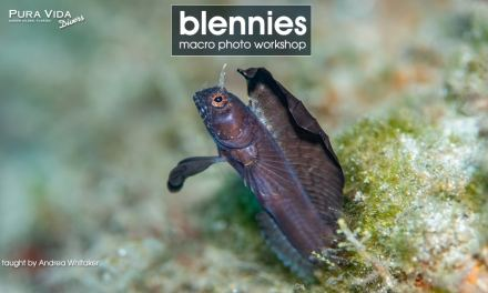 BLENNY MACRO PHOTOGRAPHY WORKSHOP