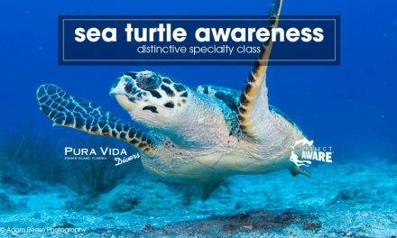 Sea Turtle Awareness: PADI Distinctive Specialty