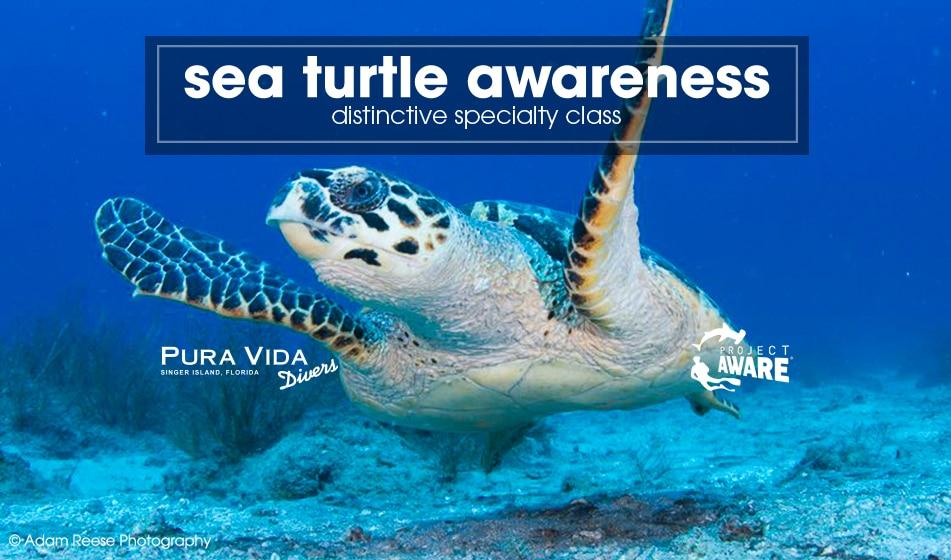 Sea Turtle Awareness: PADI Distinctive Specialty