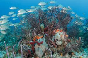 Coral Reef Conservation Class - Laz Photo