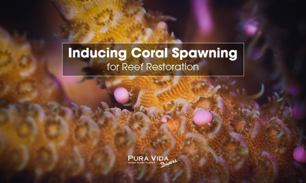 INDUCING CORAL REEF SPAWNING