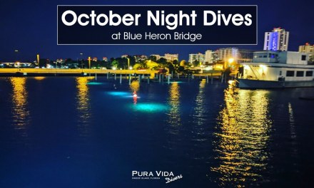 OCTOBER NIGHT DIVES