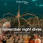 NOVEMBER GUIDED NIGHT DIVES
