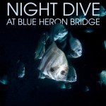 FEBRUARY NIGHT DIVES