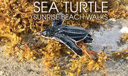 SEA TURTLE SUNRISE WALK