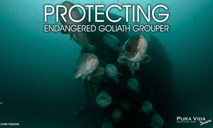 PROTECTING GOLIATH GROUPER: SOCIAL NIGHT