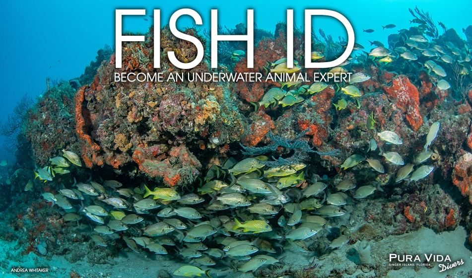 FISH IDENTIFICATION SPECIALTY: WHAT'S THAT FISH?