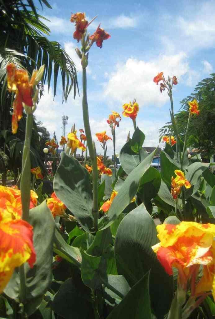 Love these flowers outside of La Cascada!