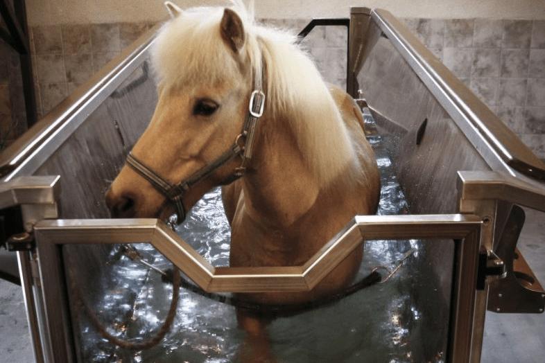 Balnéothérapie équine chez Pur Cheval