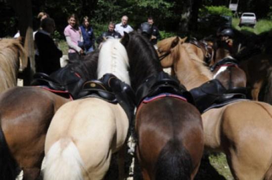 photo_2_esprit-pur-cheval