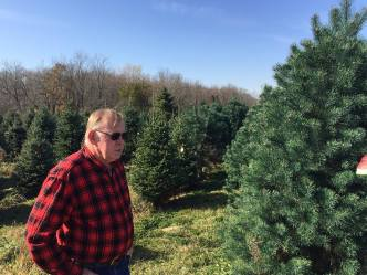 Dan Cassens, Purdue University professor of forestry and natural resources and Extension wood products specialist, has grown Christmas trees for nearly 40 years on his farm, Cassens Trees. (Purdue Agricultural Communication photo/Darrin Pack)