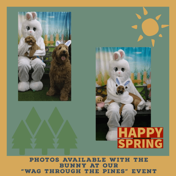 Wag Though the Pines Easter Bunny Picture