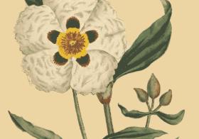 L'Origine des parfums
