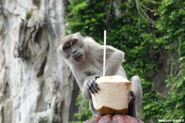 eau de coco macaque kuala lumpur