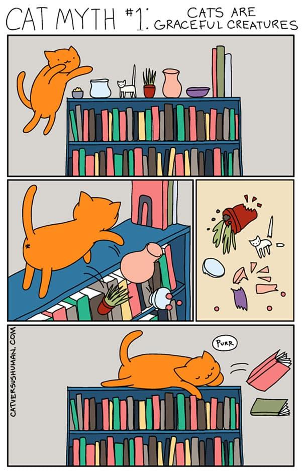 vie avec chat 7
