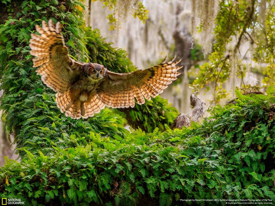 national-geographic-14