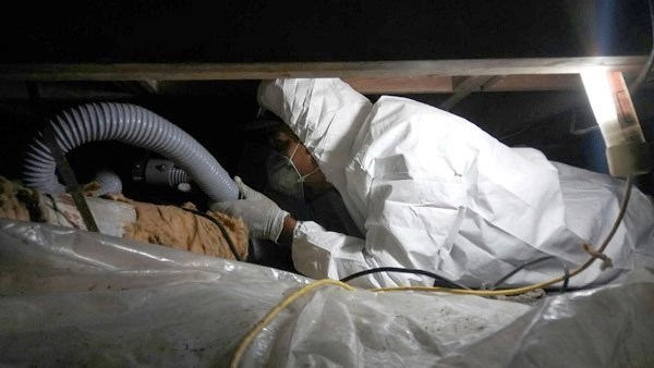 mold remediation plano