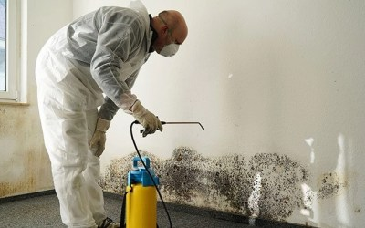 Analyzing The Process And Benefits Of Professional Mold Remediation