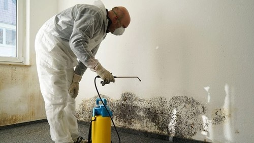Safe Home Mold Removal