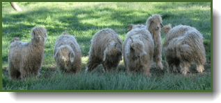 environmental-grazing3-300x127