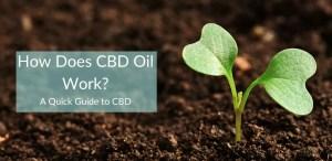 how does cbd oil work