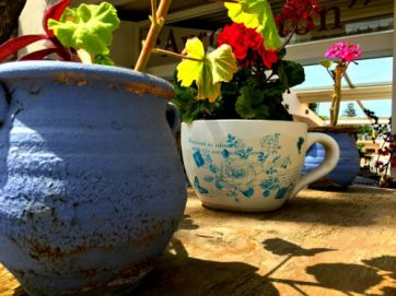 platanias potted plants