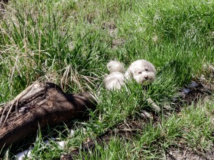 Charlie loved laying in the long green grassy meadow behind our campsite.