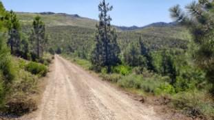 Verdi road
