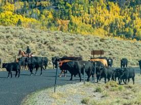 Herd crossing the road